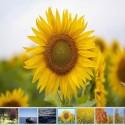 Galería de fotos y videos Fotorama en Prestashop